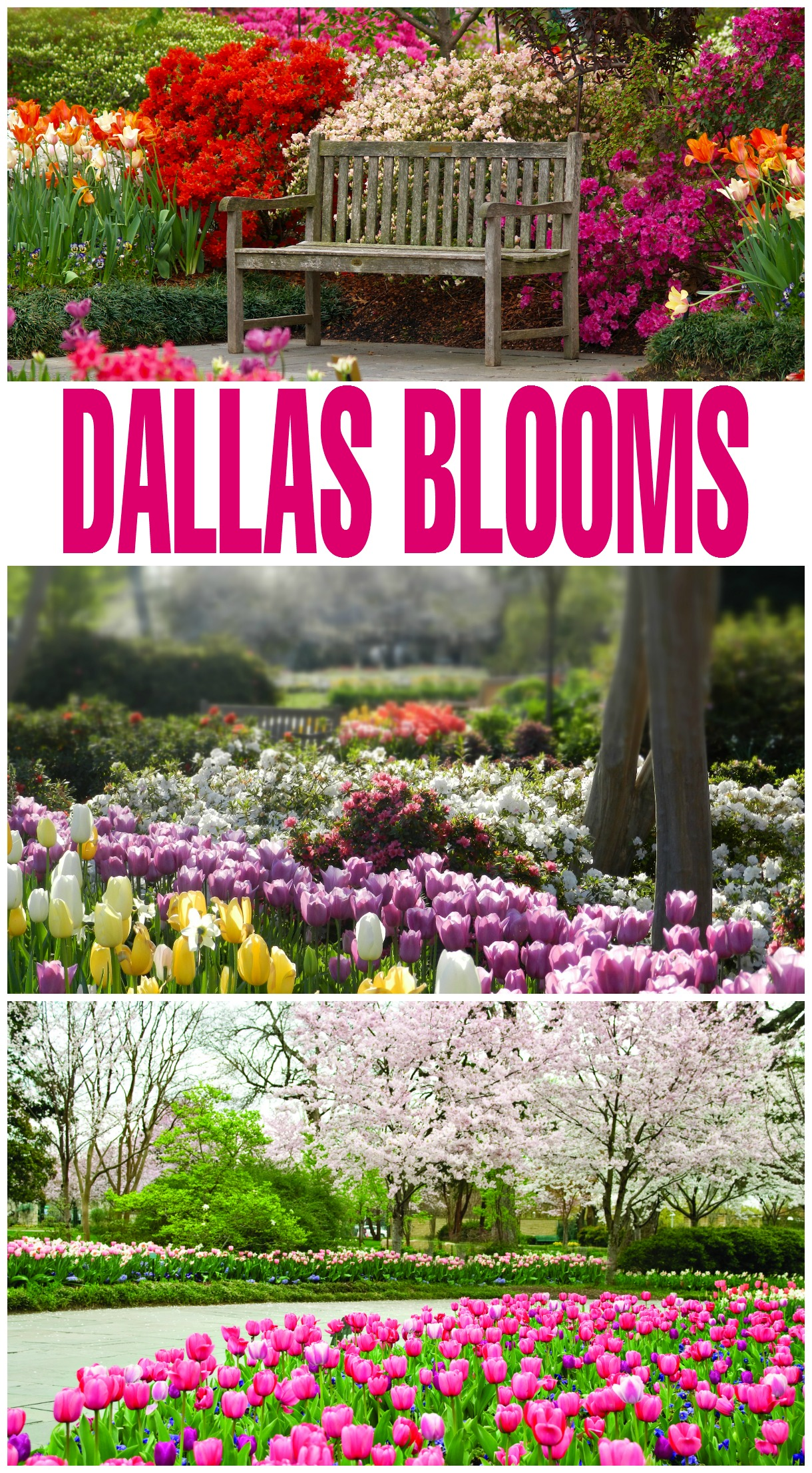 Free Admission and Parking, Just in Time for Dallas Blooms!